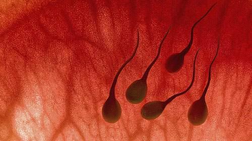 Nguyên nhân và cách điều trị xuất tinh ra máu